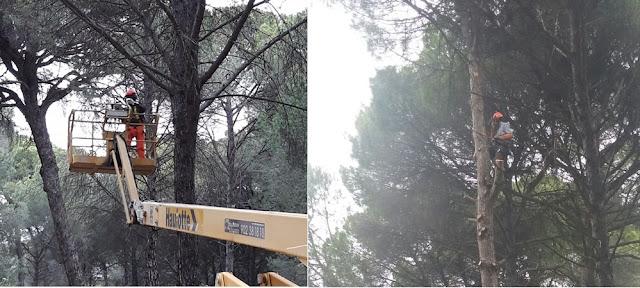 http://www.esvalverde.com/2018/04/podas-en-altura-en-el-pinar.html