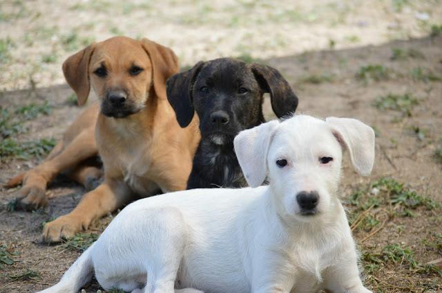Algarve terá um dos maiores santuários de animais de Portugal