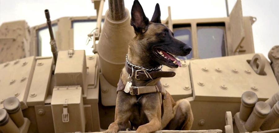 Max, lucrează cu unitățile militare din Afganistan