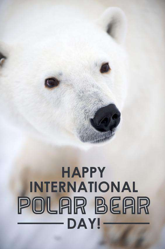 International Polar Bear Day Wishes Photos