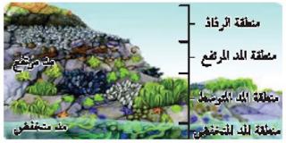منطقة المد والجزر