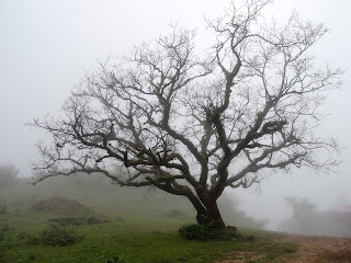 A skeletal black tree on a green and misty hillside.  Photo by Adarsh Kummur on Unsplash.