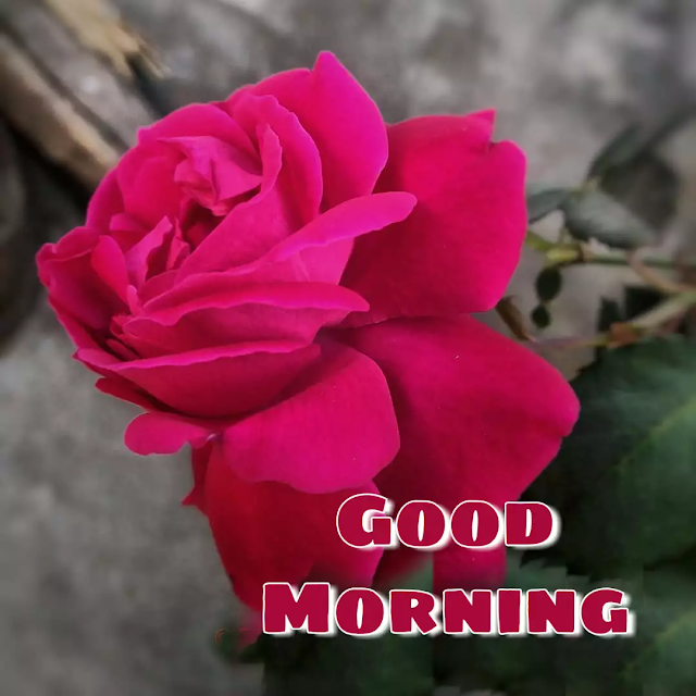 good morning flower picture