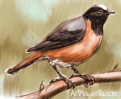 Common Redstart sketch painting. Bird art drawing by illustrator Artmagenta