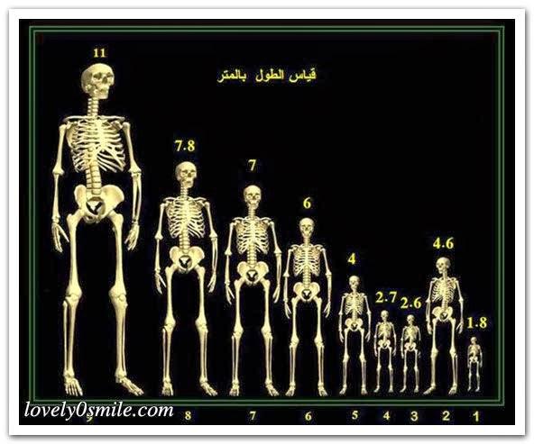 حياتنا قصة قوم عاد ومدينتهم إرم بالصور سبحان رب الكون