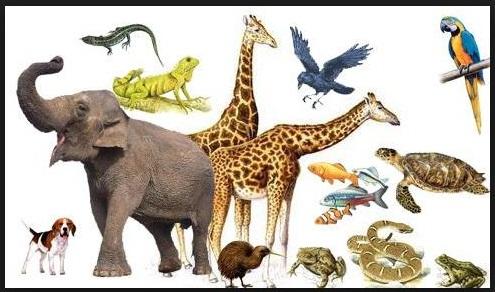 Nama Nama Binatang Lengkap Mulai AZ  DAFTAR NAMA HEWAN