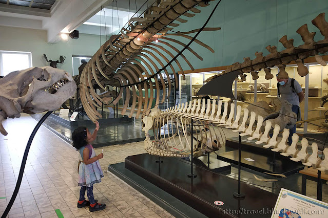 places to visit in Liege with kids Aquarium Natural History Museum