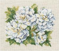 RTO M373 Garden roses