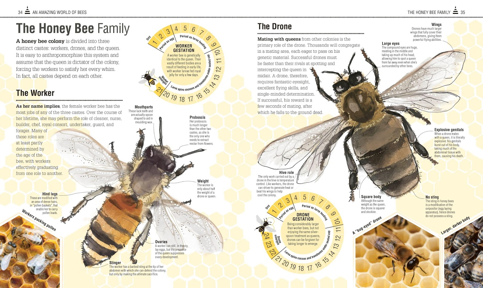 bumble bee diagram how to home electrical wiring diagrams drone pictures pin on pinterest pinsdaddy