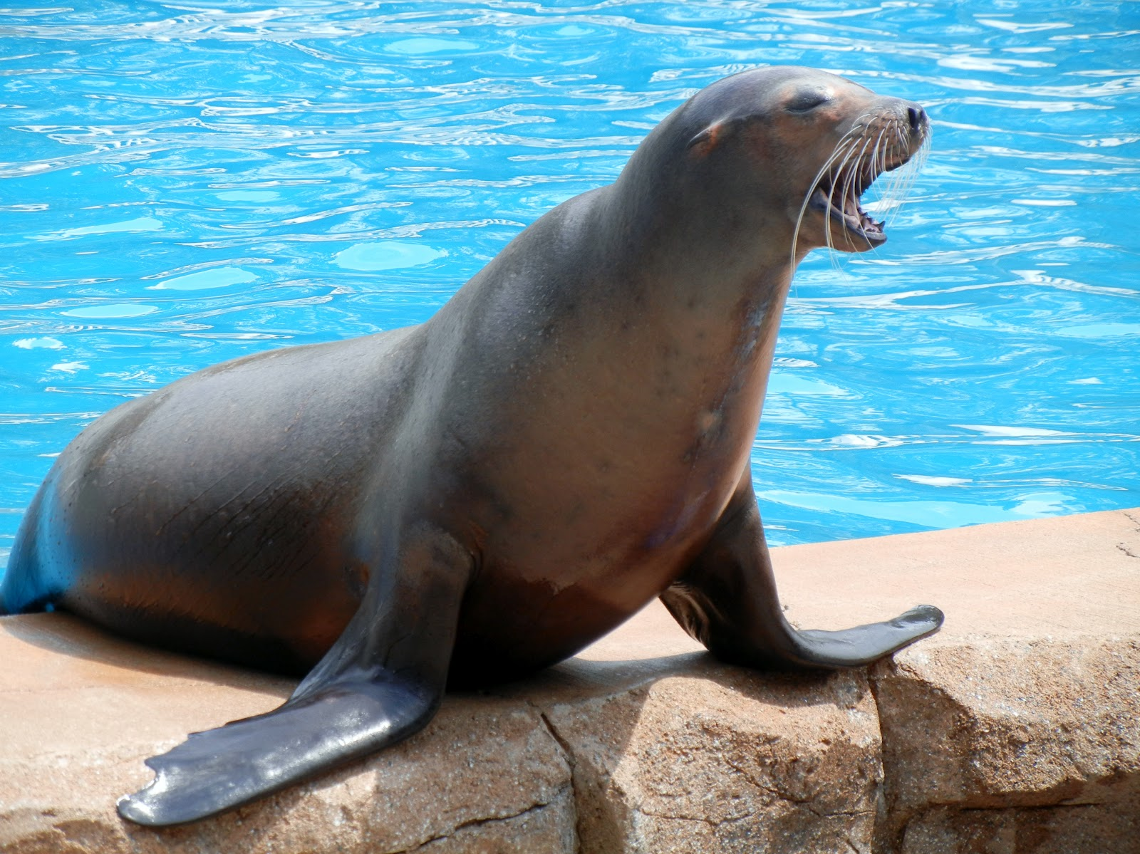 Sea Lion - Animals Photos