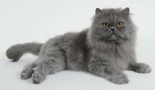 """Usaha KECIL kucing hias """"Cat Corner"""""""