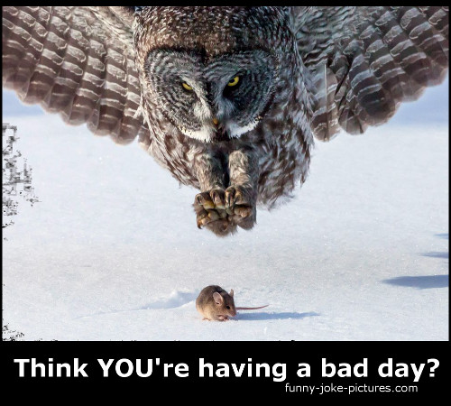 Funny Memes For Having A Bad Day : Bad day owl mouse meme funny joke pictures