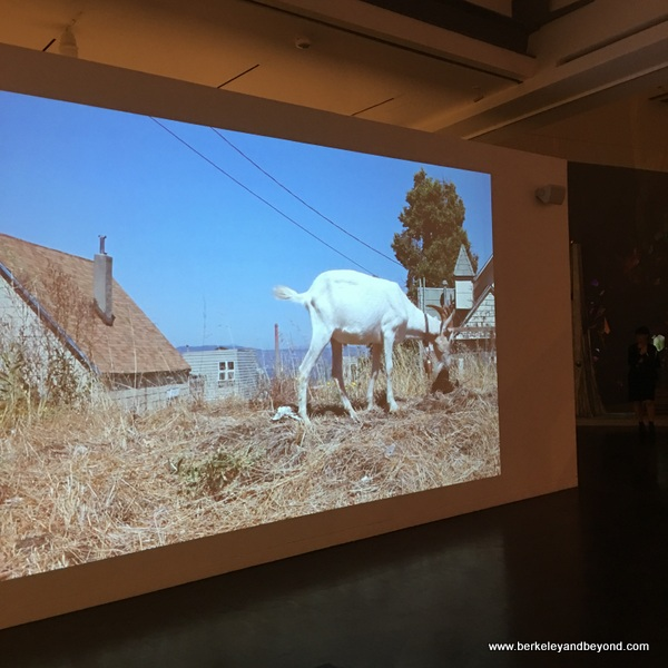 """Milk and Honey"" video exhibit in Jewish Folktales Retold show at Contemporary Jewish Museum in San Francisco"