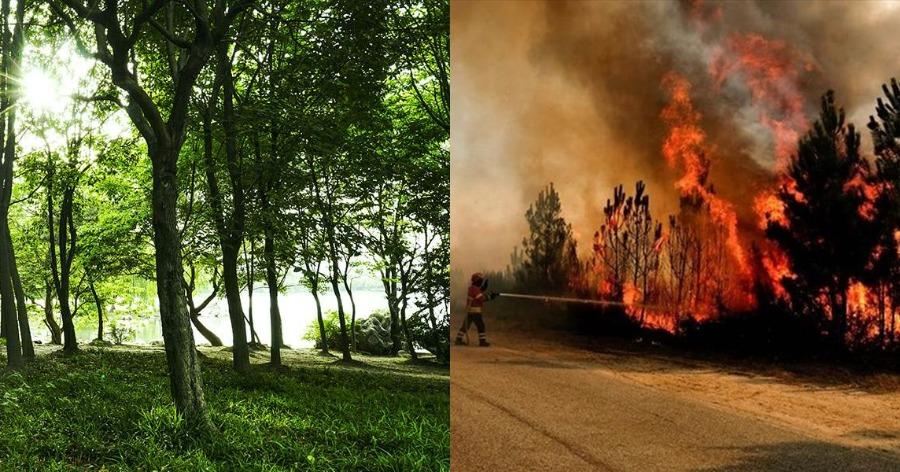 Τι κάνει τα βουνά της Βουλγαρίας να μην καίγονται όπως αυτά της Ελλάδας