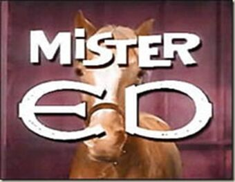 Episode 13  Mr. ED