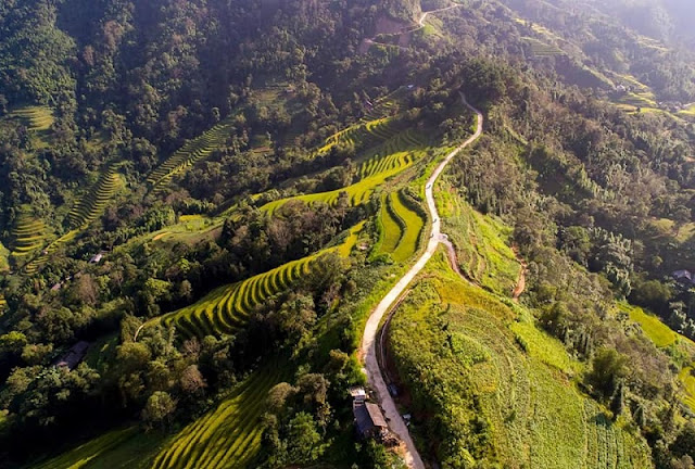 Come to Hoang Su Phi to Watch Majestic Terraced Fields 2