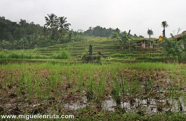 Vivir-recursos-naturales-Bali