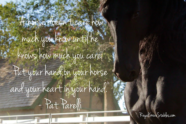 Cute Horse Quotes: Royal Grove Stables Blog: INSPIRATIONAL HORSE QUOTES