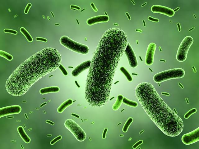 3 Fungsi Bakteri Baik di Dalam Tubuh Manusia