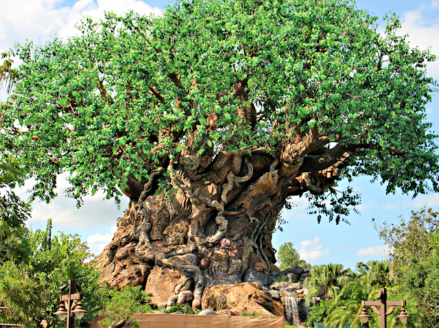 Huge tree at Disney World
