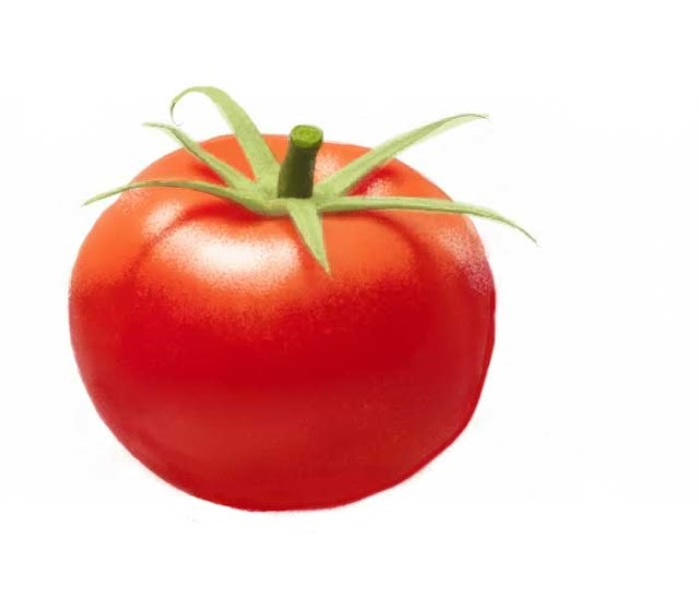 How to draw a tomato easy step by step tomato drawing for kids with color