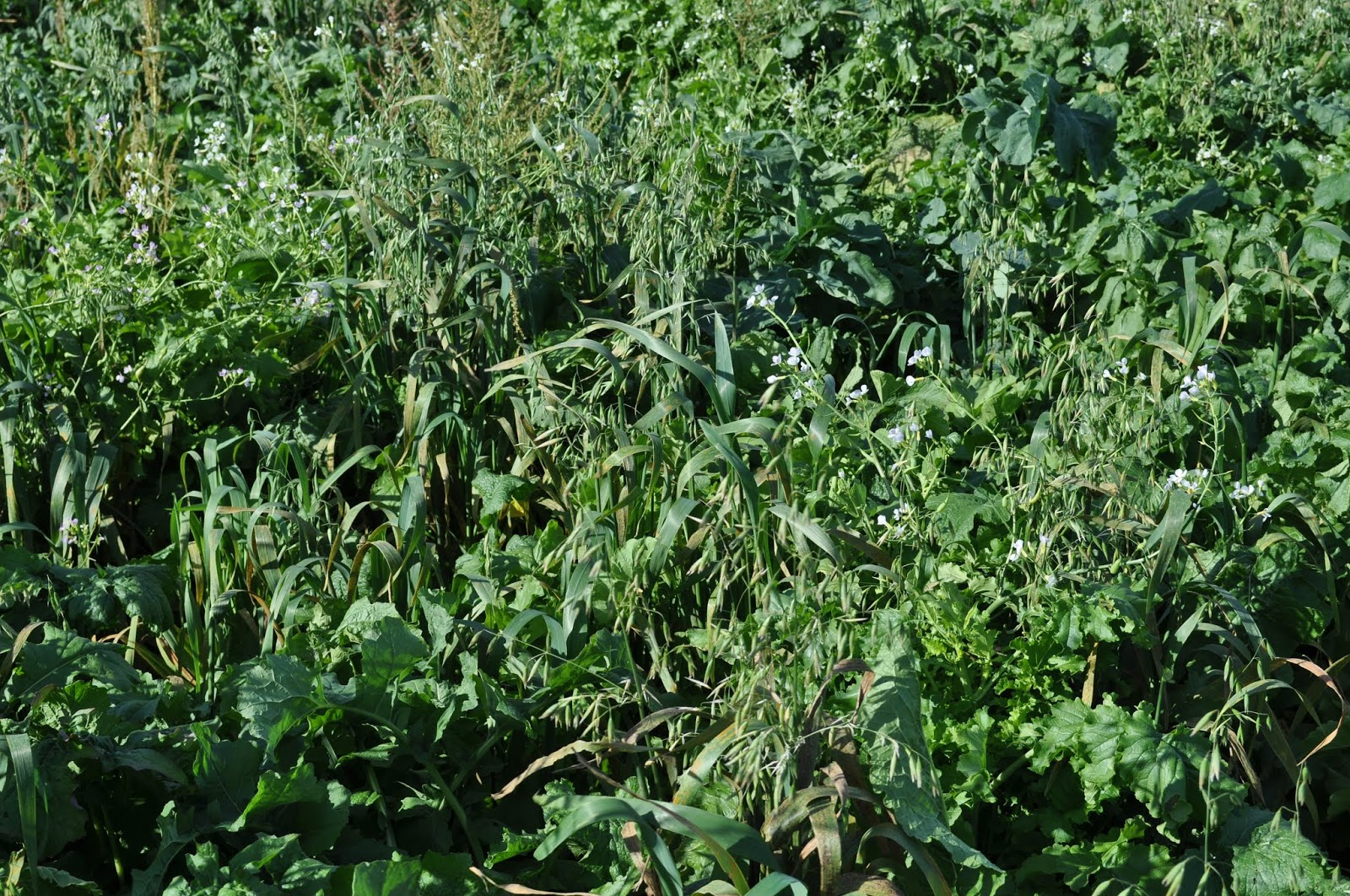 Cover Crop Options For Prevent Plant Acres Drowned Out Areas