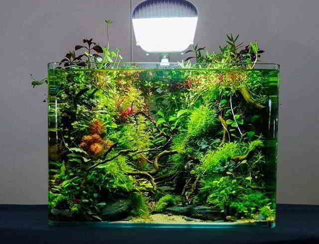 Aquarium Design And Freshwater Aquascape Inspiration