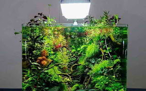 Aquarium Design And Freshwater Aquascape Inspiration ...