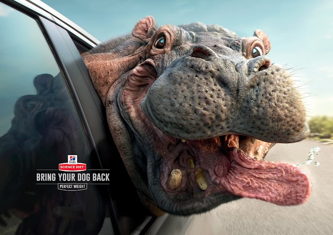 Trae a tu mascota de vuelta de su sobrepeso, la excelente campaña gráfica de Hill's