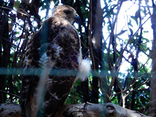 Parco Gallorose(ガッロロゼ公園)鷲