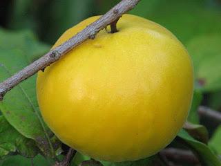 araza fruit images