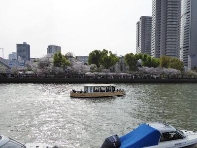 桜之宮公園の桜並木 クルージング