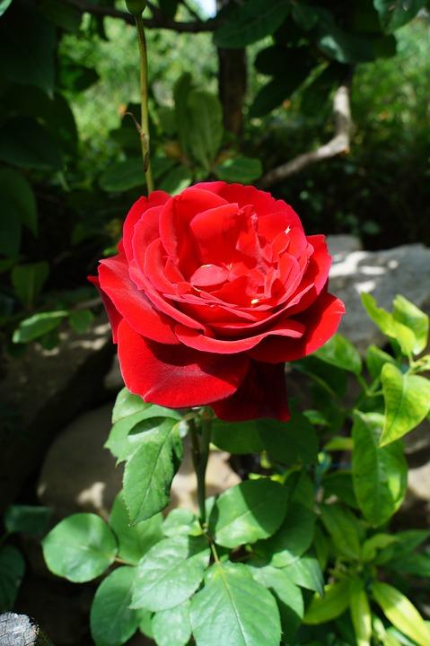 Gardenology Most Beautiful Flowers