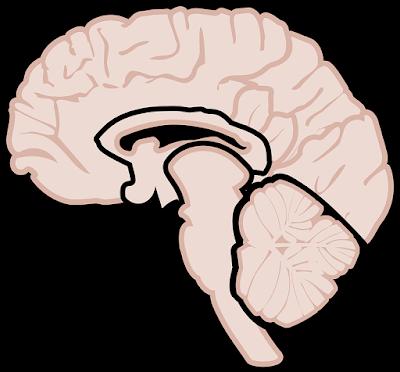 5 نصائح للتعامل مع مرض التصلب العصبي المتعدد