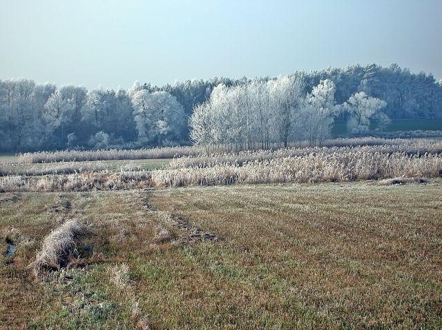 łąka, lasy, pola, zima, szron