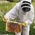 Ενισχύεται με 120 εκατ. ευρώ ο τομέας της ευρωπαϊκής μελισσοκομίας