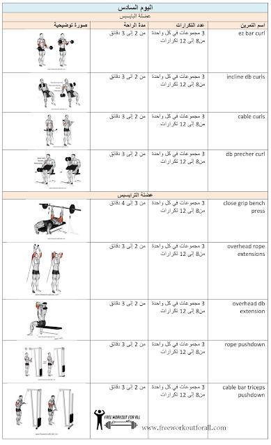 جدول تمارين كمال الاجسام تمارين عضلة الدراع
