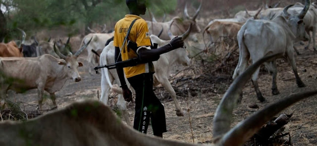 Suspected herdsmen kill 2 residents, shoot soldier in Adamawa