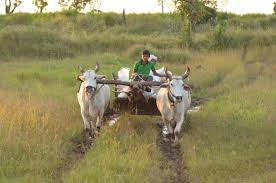 A JOURNEY BY A BULLOCK CART