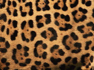 42e1be8529 The jaguar print looks a lot like the leopard print
