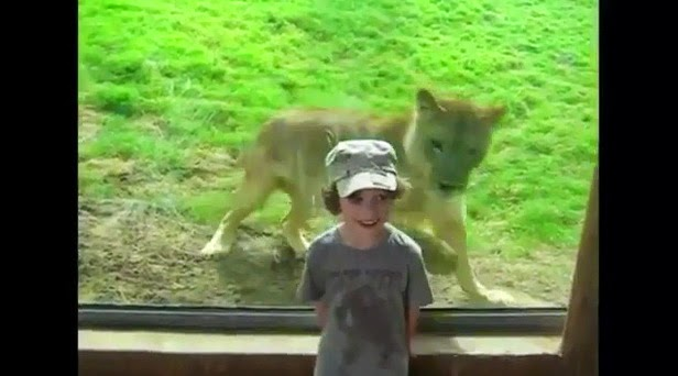 http://www.funmag.org/video-mag/mix-videos/children-at-zoo/
