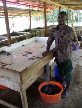 Fish Farming in pictures