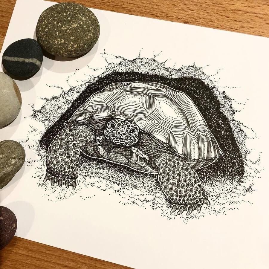 05-The-tortoise-nap-Diane-Swartzberg-www-designstack-co