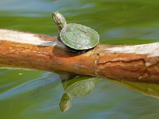 pencegahan-penyakit-kura-kura.jpg