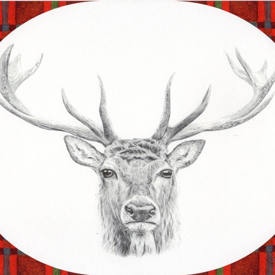 a hand drawn graphite illustration of a stag, with watercolour red tartan frame
