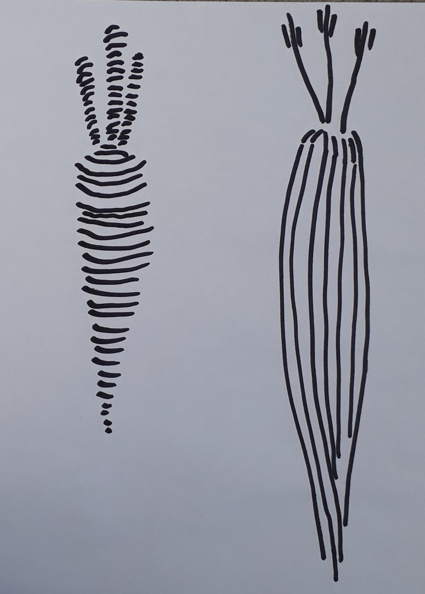 Mustalla tussilla piirretyt porkkanat