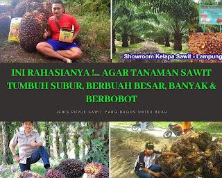 http://www.distributorpupuknasa.com/2019/10/agen-resmi-pupuk-sawit-nasa-di-pekanbaru.html
