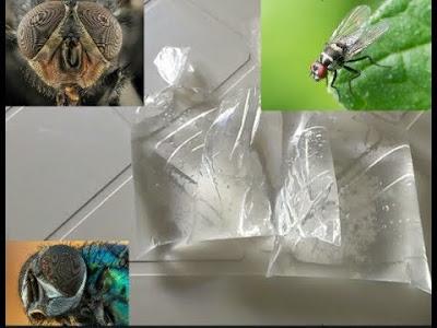 حيلة بسيطة لمكافحة الحشرات والقطط بالماء