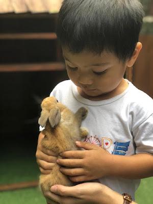 aizar dan kelinci