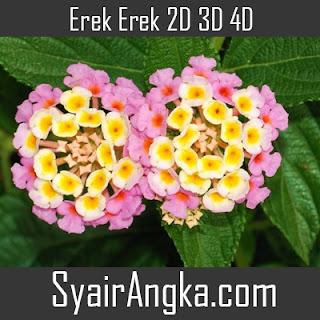 Erek Erek Bunga Lantana 2D 3D 4D